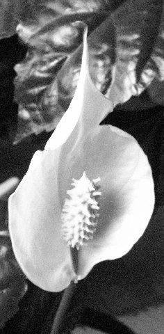 1929619.jpg