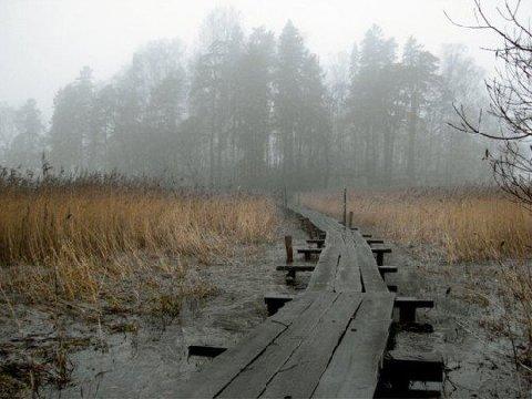 2005067.jpg