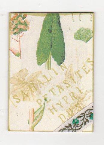 1910506.jpg