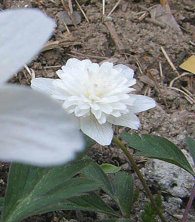 2005686.jpg