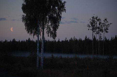 1852894.jpg